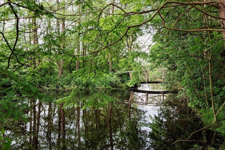 My Island Last Week Dutch Countyside Through The Bush For You ;-) Bridge View