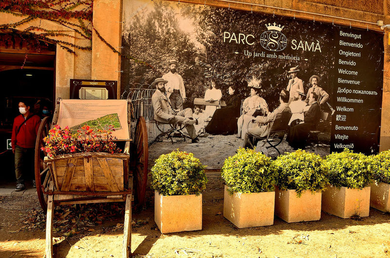 Potted plants for sale in market