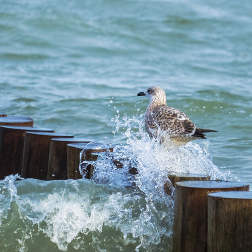 Bird perching on sea against sky