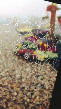 Spider Web Close-up Web Fragility Nature Focus On Foreground No People Spider Beauty In Nature Water Drop Outdoors Wet Day Backgrounds Intricacy Spiderweb Spider Webs Spider's Web Drops Of Rain Drop Of Water Drops Of Water Drop On Spider Web Drop On Web Spider Web And Rain