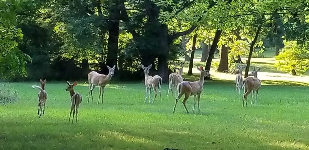 Deer Tree Rural