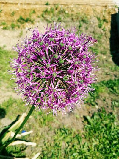 Cheapflower Flower Nature Plant Beauty In Nature Flower Head
