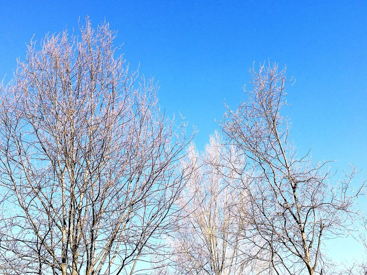low angle view, tree, nature, branch, blue, clear sky, bare tree, beauty in nature, no people, outdoors, day, growth, sky, freshness