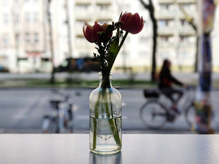 Close-up of red flower in glass bottle on table