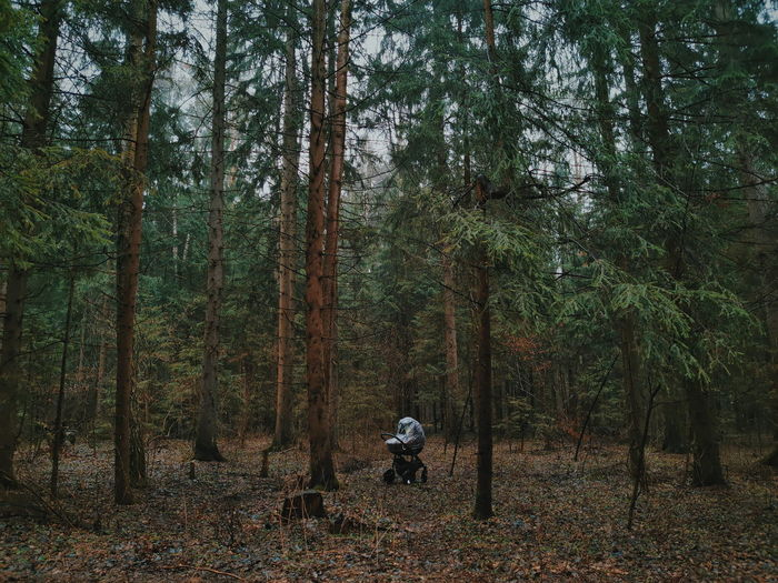 Baby stroller stands in the middle of a gloomy rainy green forest