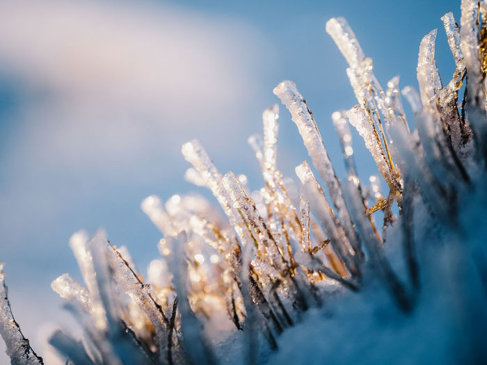 Close-up of frozen plant against sky