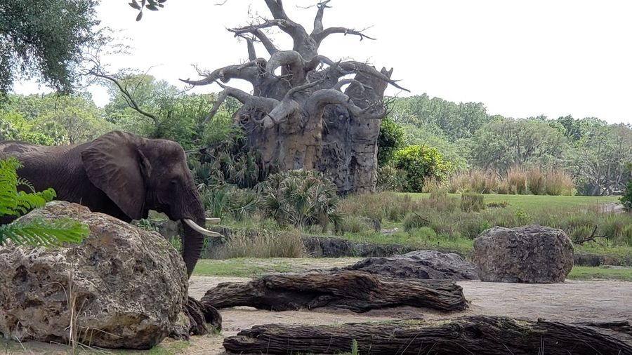 View of elephant on rock against sky