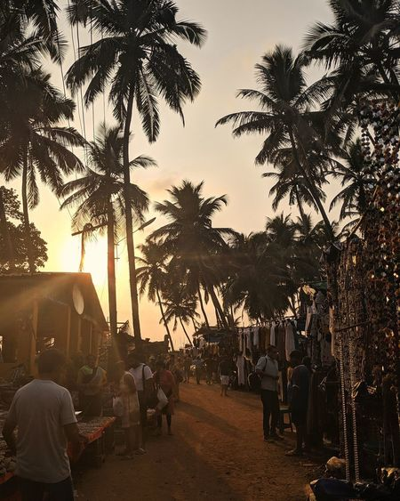 Group of people by palm trees at sunset