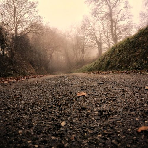 Murky Atmosphere Mist Trees Branches And Sky Branches Misty Morning Misty Road Misty Forest