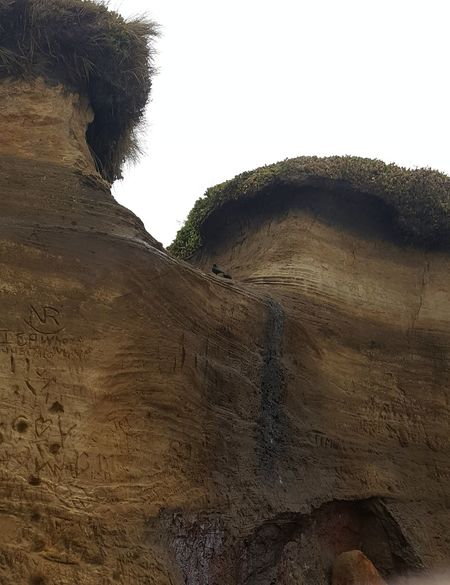 Sand Dune Sand Beach Tree Backgrounds Sky Close-up