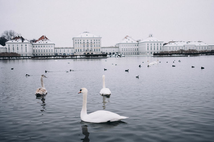 Nymphenburg palace in winter, munich, bavaria, germany with swans swimming in a lake