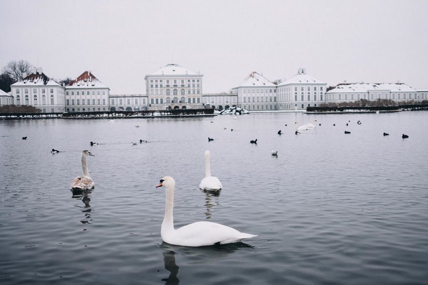 Nymphenburg Palace in winter, Munich, Bavaria, Germany. Bavaria Copy Space Horizontal Munich Nymphenburg Palace Tourist Attraction  Travel Photography Winter Animal Themes Animal Wildlife Animals In The Wild Architecture Beauty In Nature Bird Building Exterior Built Structure Day Europe Germany Lake Landmark Large Group Of Animals Nature No People Outdoors Schloss Nymphenburg Sky Snow Swan Swimming Symmetry Travel Destinations Water Water Bird Waterfront Wildlife