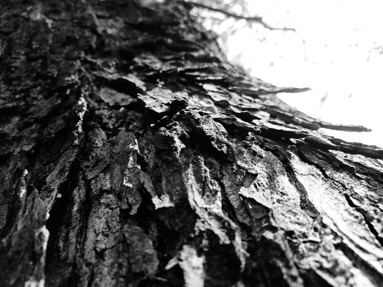 tree trunk, tree, rough, textured, bark, close-up, nature, no people, growth, day, outdoors, beauty in nature