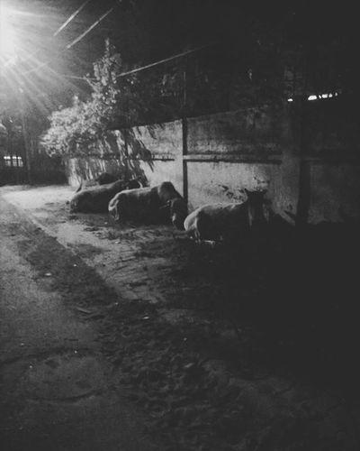 Holy cows! 🐮 Black Igersbnw Portraits Bwoftheday Bnw Noiretblanc Noirlovers Bwbeauty White Blancinegre Monochrome Bw_lover Byn Blancoynegro Irox_bw Art Bw_society Nero Blackandwhite Ic_bw_bw Bwstyles_gf Bandw Beautiful Perfect Nb  noir bw mono bnw monoart