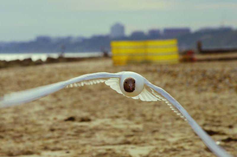 Bournemouth Beach MotionShot Sea Gull Birds Sunnyday Motionphotography MotionCapture Bokeh Closeup