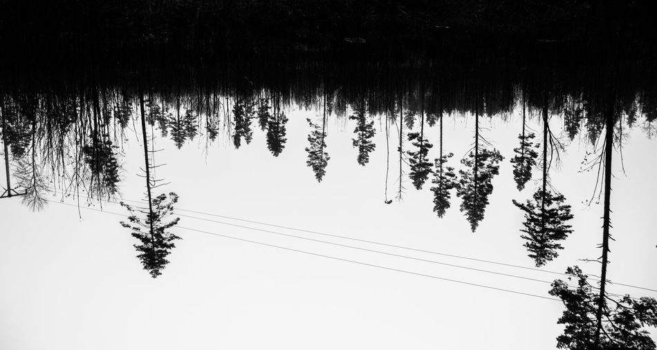 It's all about how you choose to look at things. Dark EyeEm Best Shots EyeEm Nature Lover EyeEmNewHere Beauty In Nature Blackandwhite Cable Day Forest Nature No People Outdoors Sky Tree Trees Upsidedow Upside Down
