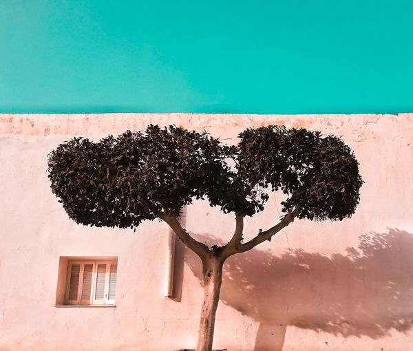 Low angle view of tree growing against building