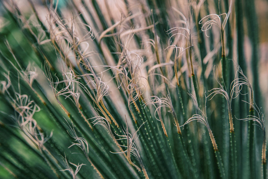 The Great Outdoors - 2018 EyeEm Awards Agriculture Backgrounds Beauty In Nature Cereal Plant Close-up Crop  Day Farm Field Full Frame Green Color Growth Land Nature No People Outdoors Plant Rural Scene Selective Focus Stalk Tranquility Wheat