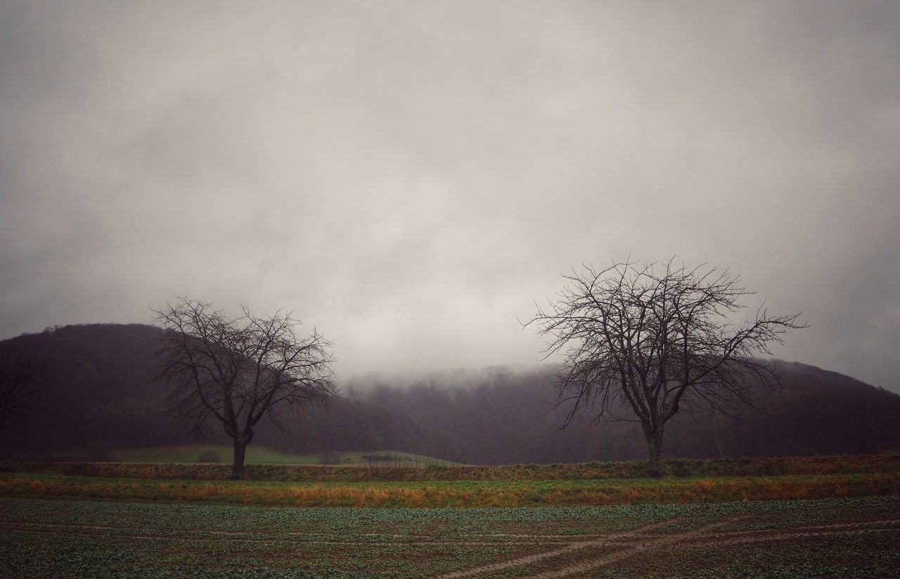 landscape, tranquility, tree, tranquil scene, nature, beauty in nature, outdoors, scenics, field, sky, day, bare tree, fog, no people