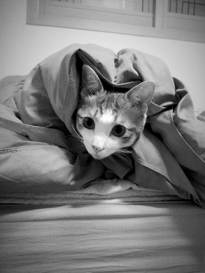 Cat Catsagram