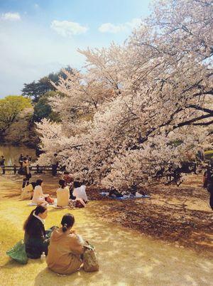 EyeEm Tokyo Meetup 3 Enjoy Life Hanami