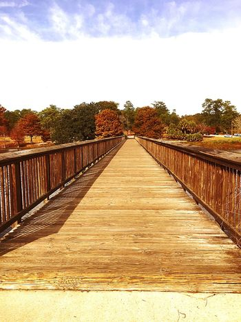 Railing Sky The Way Forward Tree Outdoors Wood - Material Day I Love The Color Of Fall❤️ Cloud - Sky Footbridge Nature Bridge - Man Made Structure Wood Paneling Beauty In Nature Architecture