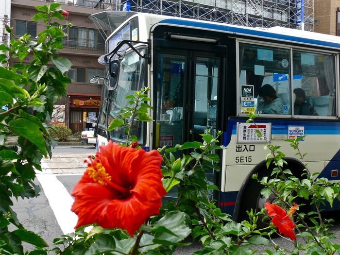 Nagasaki Today : Nearly at Nagasaki ekimae busstop Bus Bus Stop Cloudy Day Flower Bloom Hibiscus How's The Weather Today? On The Street Corner Red Flowers Streetphoto_color Waiting For Signal 長崎駅前