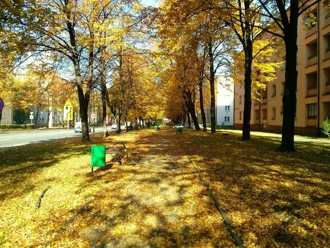 Colors Of Autumn Autumn Leaves Autumn Colors Urban Autumn Colors Of Nature Woods Colors Leaves Zabrze Silesia