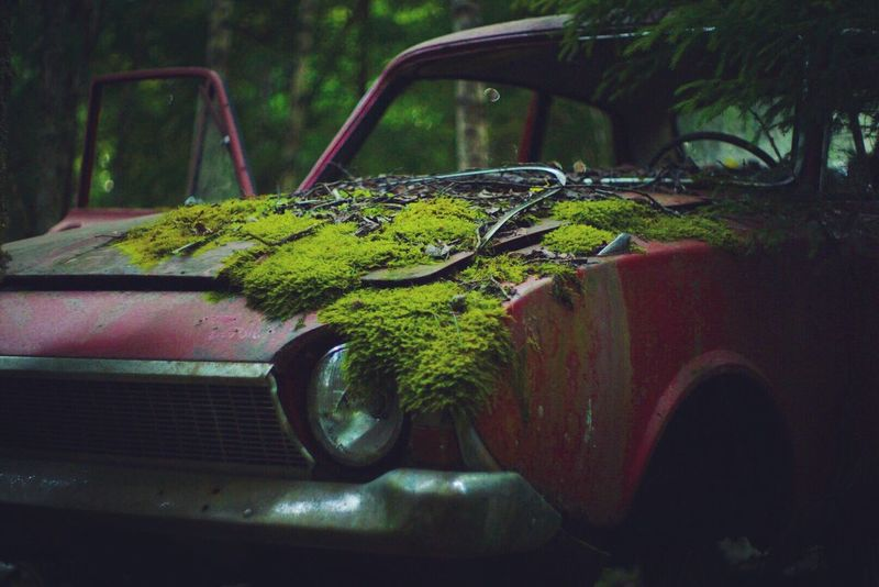 Car Classic Car No People Close-up Nature Sweden 50mm 1.4 Vintage Lens Vintage Cars Car Graveyard Graveyard Bastad Sony A6000 Sonyimages Beautiful Beauty In Nature EyeEm Best Shots EyeEm Nature Lover EyeEm Gallery