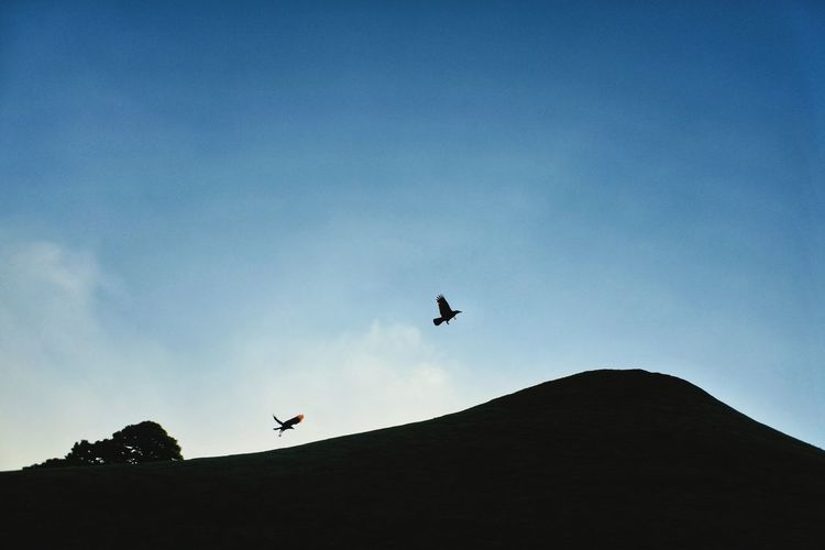 Take off and landing Background Photography Minimalism Backgrounds Sillhouette Moutain Hill Trees Landscape Landscape_Collection Landscape_photography Black Birds Sky Sky And Clouds Skyporn Sky_collection Clouds And Sky Bird Of Prey Bird Flying Vulture Spread Wings Silhouette Mid-air Sky Songbird  Beak Sparrow Robin Flock Of Birds First Eyeem Photo 2018 In One Photograph