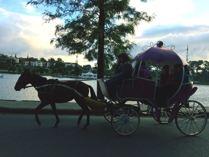 Horse Dalat Vietnam Transportation Sky Fortouristsonly My Favorite Place My Memories Fairytale  Cinderella