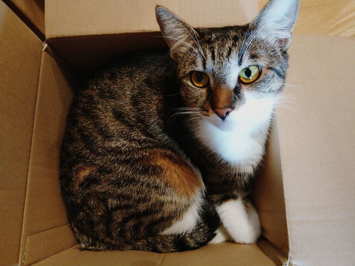 Ready to be sent away? Animals Pets Domestic Pets Domestic Animals Pet Portraits Animals Cat Cats Of EyeEm Catsagram Catsoftheworld Cat Photography Catlovers Parcel