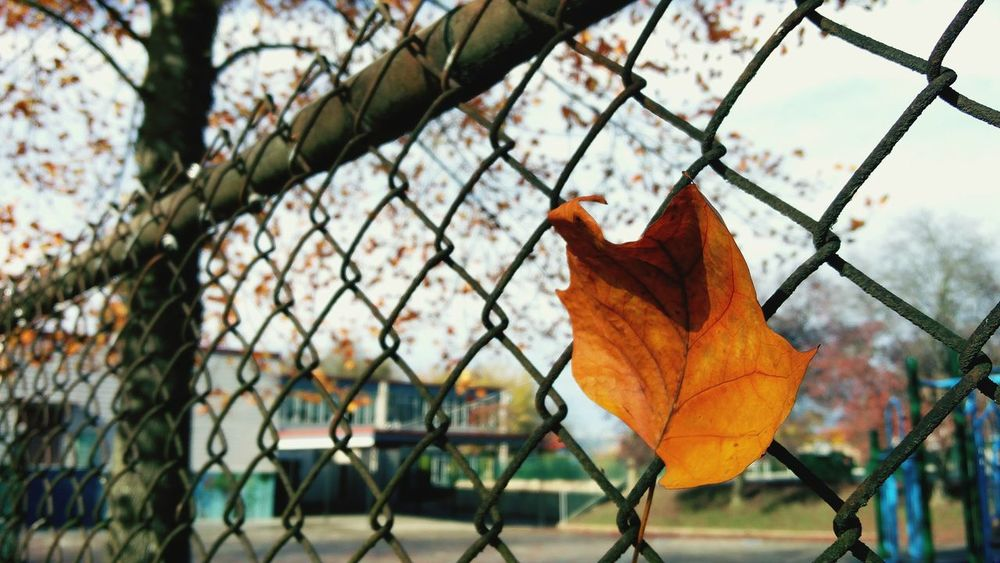 Autumn Leaf Autumn Color Oneplustwo Autumn