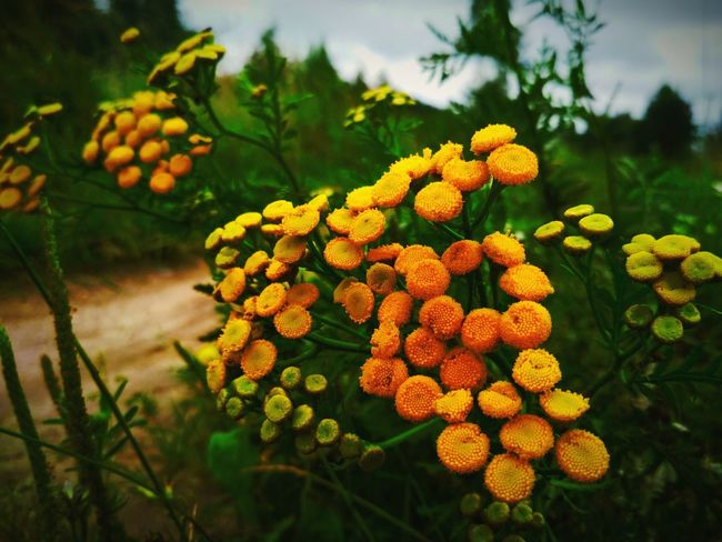 Flower Flower Head Tree Rural Scene Multi Colored Beauty Leaf Sky Close-up