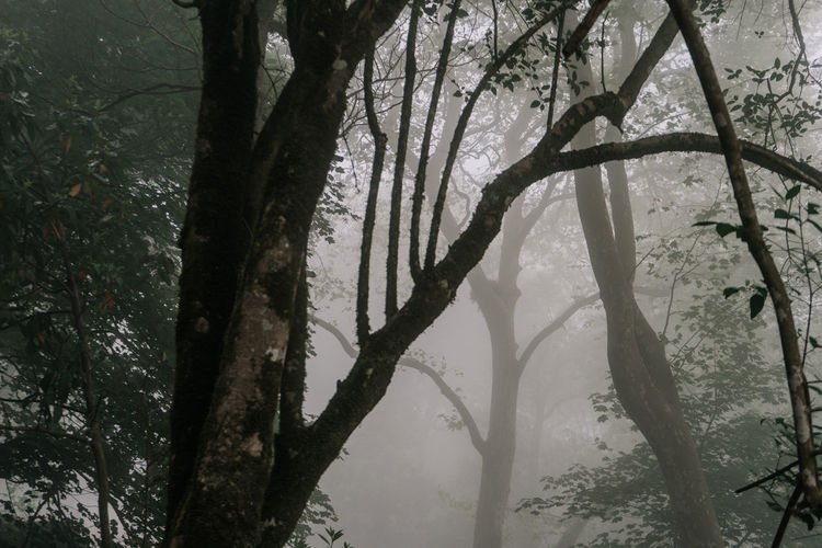 Day Outdoors Sintra (Portugal) Sintra, Portugal Tree Plant Trunk Branch Tranquility Beauty In Nature Growth Forest Silhouette Tranquil Scene Nature No People Environment Fog Moody Moody Atmosphere