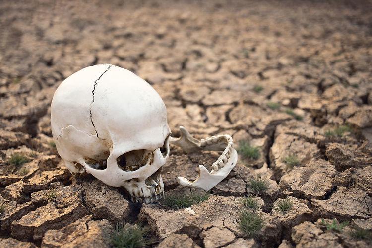 Close-up of animal skull on field