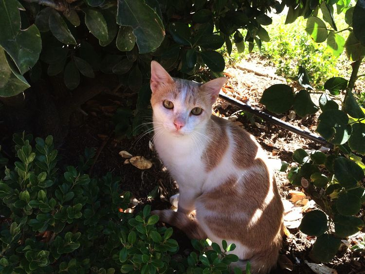 Domestic Cat Domestic Animals Pets Feline Looking At Camera Mammal Animal Themes One Animal Leaf Cat Plant Portrait Sitting No People Grass Day Outdoors Angry Nature
