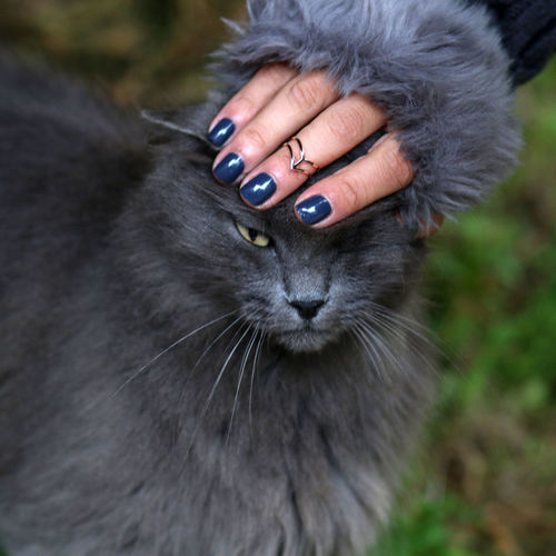 Gray Cat Gloves Ring Check This Out Animal_collection Catoftheday EyeEm Animal Lover Catsofinstagram Cat Lovers