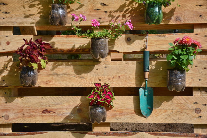 Choice Day Decoration Flower Flowering Plant Hanging Large Group Of Objects Multi Colored No People Plant Potted Plant Sunlight Variation Wall Wood - Material Wooden Work Tool
