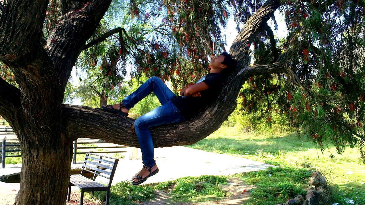 Young Man Relaxing On Tree In Park