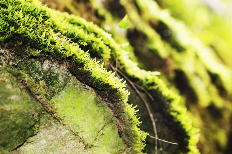 Green Color Nature Beauty In Nature Freshness Forest Growth Muschio Outdoors No People Plant Day Tree Close-up Moss Grass