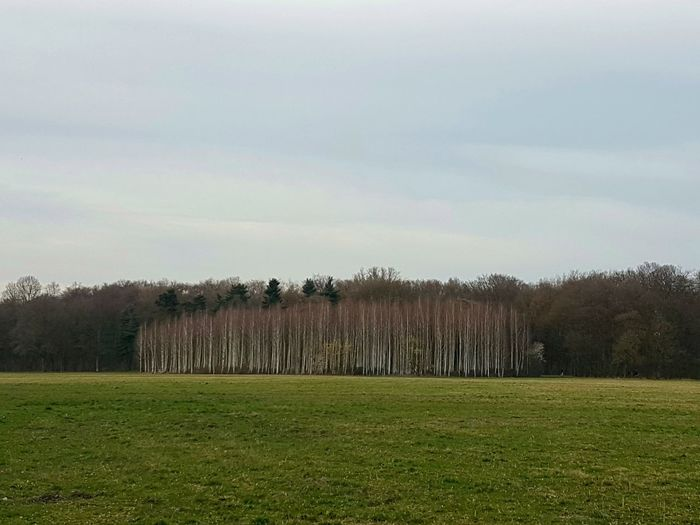 Tree Nature Tranquility Beauty In Nature Tranquil Scene No People Landscape Outdoors Grass Trees Cologne , Köln,  Silhouette Nature Photography Samsung Galaxy S7 Samsung S7 Edge Köln Canoma Photography