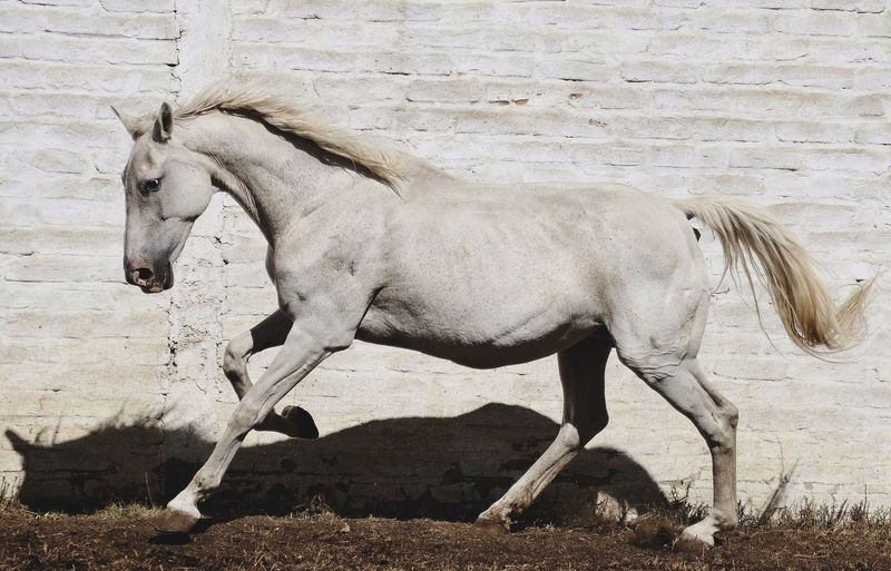 Horse running on field against wall