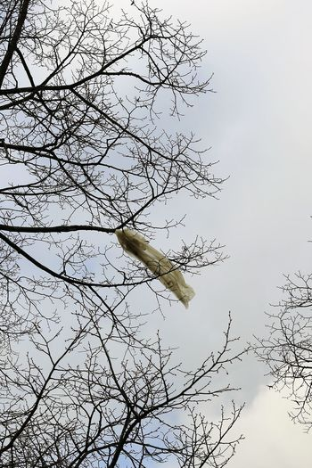 Nach Sturmtief Friederike 2018 - Plastiktüte im Baum Müllproblem Plastic Bag Plastic Bag Trees Storm Front Stormy Weather Sturmtief Sturmtief Frederike Sturmtief Friederike After The Storm Bare Tree Branch Day First World Problems Low Angle View Nach Dem Sturm Nature No People Outdoors Plastic Bag In Tree Plastic Garbage Everywhere Sky Tree Weather Conditions End Plastic Pollution