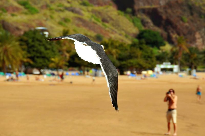 Close-Up Of Flying Bird Over Beach