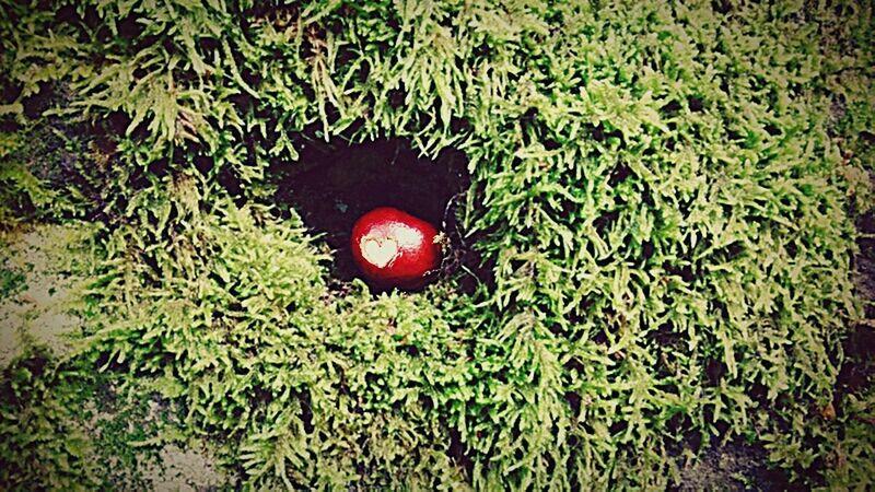 Kastanien sammeln im Brunnental Nature Love Der Herbst Ist Da