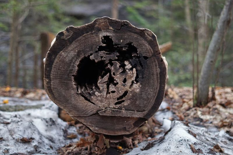 Close-up of log on tree trunk in forest