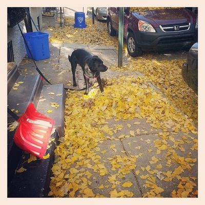 This is the only part of the fall that I don't really care for Cleanitup Fallenleaf Sillymexican Sillydog