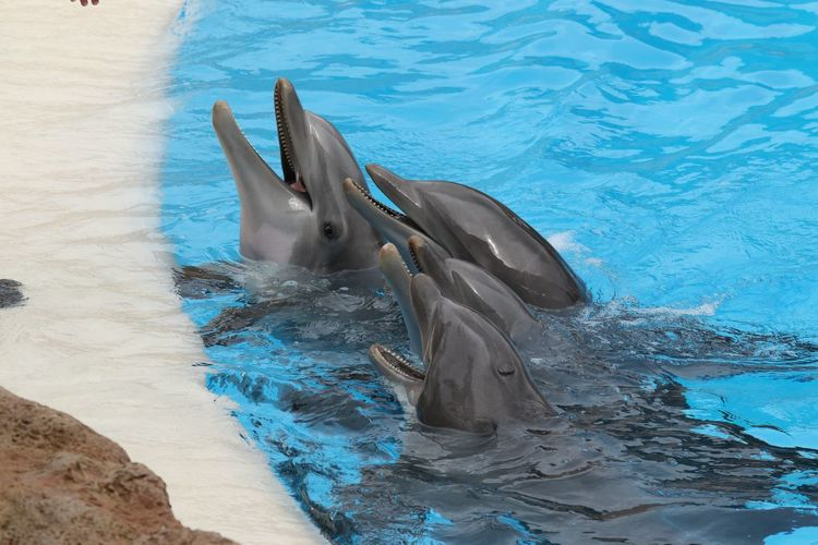 Side view of dolphins in blue water