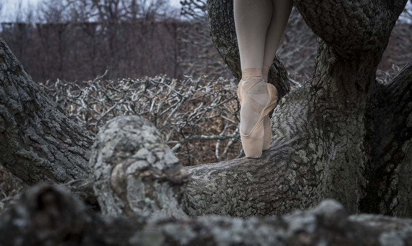 Low section of woman standing on tree trunk